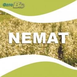 NEMAT - triumph