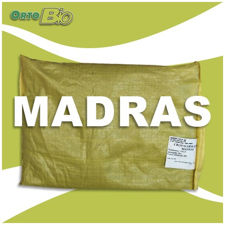 MADRAS - triumph